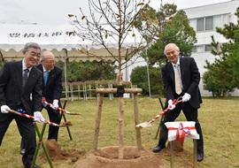 植樹の盛り土の様子