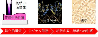 124_h.kurita fig.1.0b.png
